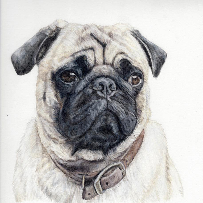 Brandi Maples of Patou Pet Portraits offers custom drawings of your pet.